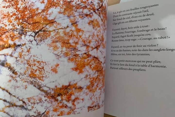 Arboretum pages 18-19
